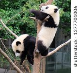 chengdu szechwan china may2016... | Shutterstock . vector #1277701006