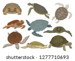 Stock vector turtles in various views set tortoise reptile animals vector illustration on a white background 1277710693