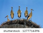 group of amusing young the... | Shutterstock . vector #1277716396