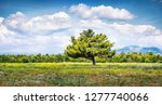 lonely tree on the coast of... | Shutterstock . vector #1277740066