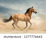 wild mustang in desert running...   Shutterstock . vector #1277776663