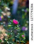 beautiful pink flower in the... | Shutterstock . vector #1277793286