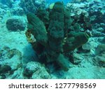 coral on the seabed | Shutterstock . vector #1277798569