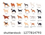 set of dogs of different breeds ... | Shutterstock .eps vector #1277814793