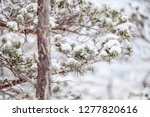 frost and ice crystal covered... | Shutterstock . vector #1277820616