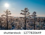 frost and ice crystal covered... | Shutterstock . vector #1277820649