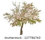 Apple Tree With Flowers...