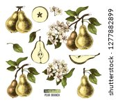 hand drawn set of pears  ... | Shutterstock .eps vector #1277882899