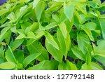 green leaf   Shutterstock . vector #127792148