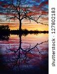 Tree Lake Sunset