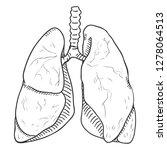 vector sketch human lungs .... | Shutterstock .eps vector #1278064513