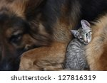 Stock photo large dog and a cat 127816319