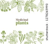 template with medicinal plants. ... | Shutterstock .eps vector #1278265993