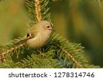 the goldcrest  regulus regulus  ...   Shutterstock . vector #1278314746