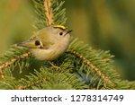 the goldcrest  regulus regulus  ...   Shutterstock . vector #1278314749
