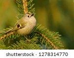 the goldcrest  regulus regulus  ...   Shutterstock . vector #1278314770