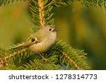 the goldcrest  regulus regulus  ...   Shutterstock . vector #1278314773