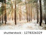 dreamy landscape with winter... | Shutterstock . vector #1278326329