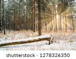 dreamy landscape with winter... | Shutterstock . vector #1278326350