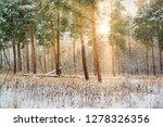 dreamy landscape with winter... | Shutterstock . vector #1278326356
