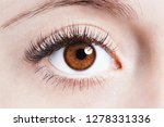 close up image of human eye | Shutterstock . vector #1278331336