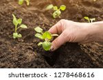 hands seeding plants in garden... | Shutterstock . vector #1278468616