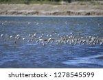 the birds of the sea   Shutterstock . vector #1278545599