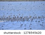 the birds of the sea   Shutterstock . vector #1278545620