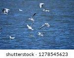 the birds of the sea   Shutterstock . vector #1278545623