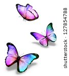 Three Color Butterflies ...