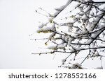snowscape of west lake in... | Shutterstock . vector #1278552166