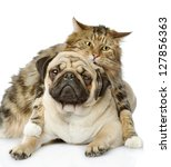the cat hugs a dog. isolated on ... | Shutterstock . vector #127856363