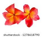 plumeria flower isolated on... | Shutterstock . vector #1278618790