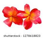 plumeria flower isolated on... | Shutterstock . vector #1278618823