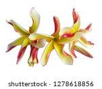 plumeria flower isolated on... | Shutterstock . vector #1278618856