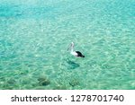 a pelican at the beach in blue... | Shutterstock . vector #1278701740