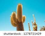 giant cactus plants from famous ... | Shutterstock . vector #1278721429