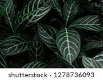 beautiful leaf patterns for... | Shutterstock . vector #1278736093