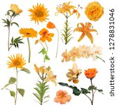 fourteen orange flowers... | Shutterstock . vector #1278831046