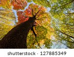 Autumn Forest Trees. Nature...