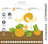 melon beneficial features... | Shutterstock .eps vector #1278908689