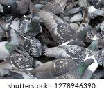 pigeons flocked together on...   Shutterstock . vector #1278946390