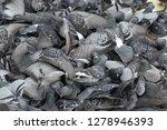 pigeons flocked together on...   Shutterstock . vector #1278946393