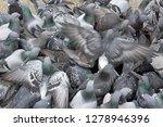 pigeons flocked together on...   Shutterstock . vector #1278946396
