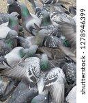 pigeons flocked together on...   Shutterstock . vector #1278946399