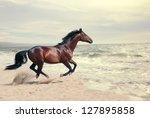 Stock photo wonderful marine landscape with beautiful bay horse 127895858