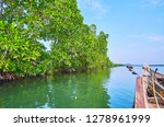 observe the unique ecosystem of ... | Shutterstock . vector #1278961999