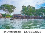 the red mangrove trees hides... | Shutterstock . vector #1278962029