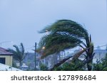 Palm Trees In Suburbs During...