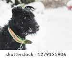 Black Terrier Dog On Snowy  ...